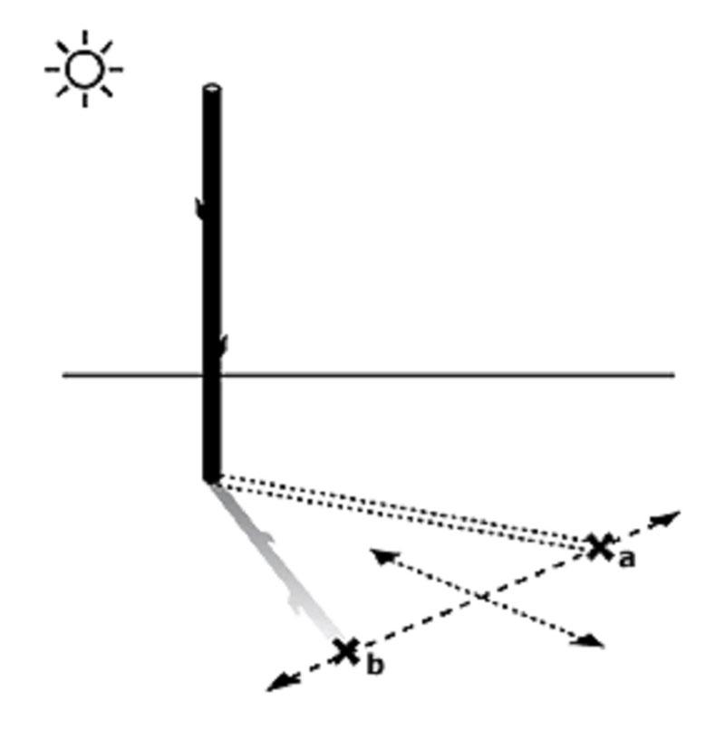 orientación con el sol